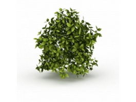 Evergreen vines 3d preview