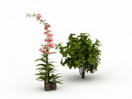Morning glory climbing plant for landscaping 3d model preview