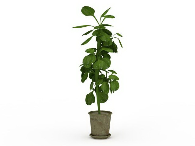 Tall potted plant 3d rendering