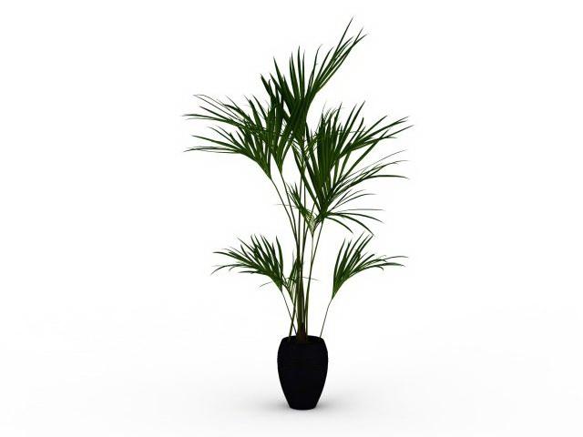 Indoor palm tree 3d rendering
