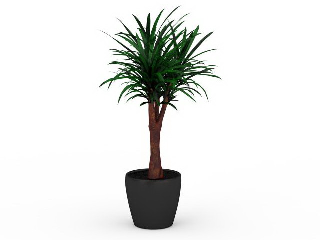 Yucca gloriosa in pot 3d rendering