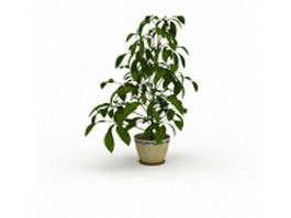 Foliage tree in pot 3d preview