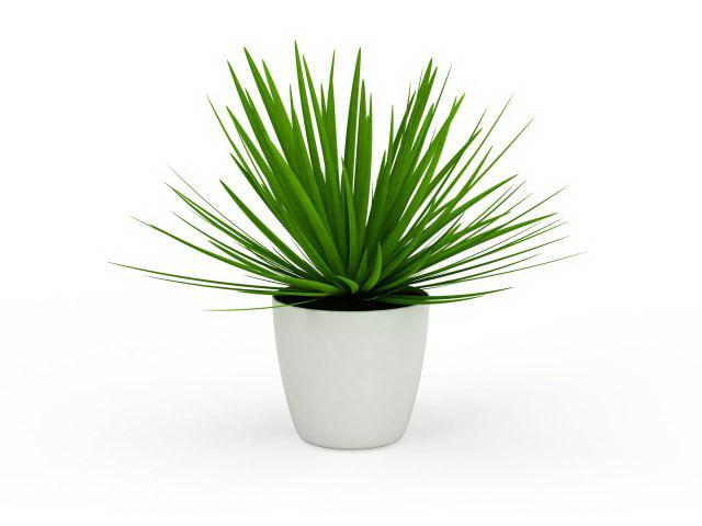 Aloe vera plant pot 3d rendering