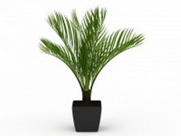 Sago palm in pot 3d preview