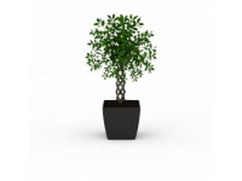 Potted braided plant 3d preview