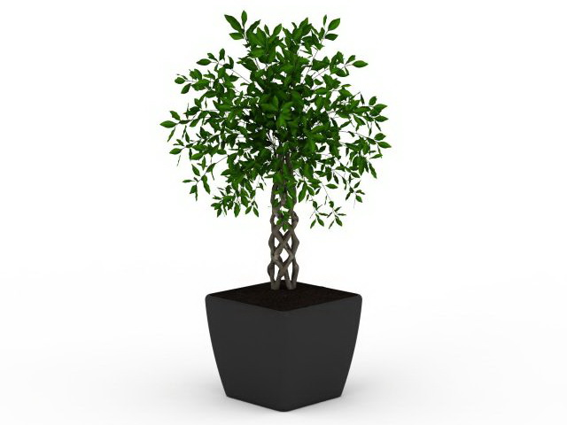 Potted braided plant 3d rendering