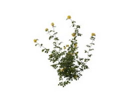 Yellow flowers shrub 3d model preview