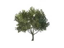 Green flourishing tree 3d model preview
