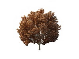 Late autumn tree 3d model preview