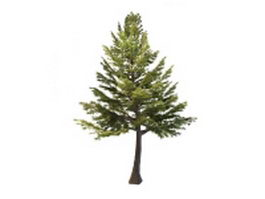 Lebanon cedar tree 3d model preview