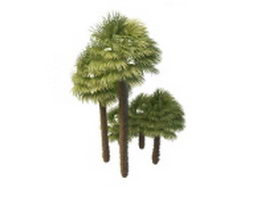 Windmill palms 3d model preview