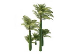King Alexander palm trees 3d preview