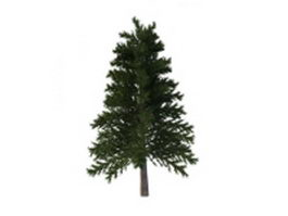 Japanese red pine 3d model preview