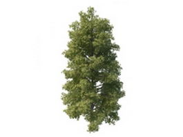 Common lime tree 3d model preview