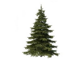Mountain spruce tree 3d model preview