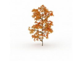 Gold autumn maple tree 3d model preview