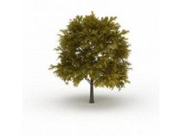Oak tree in summer 3d model preview