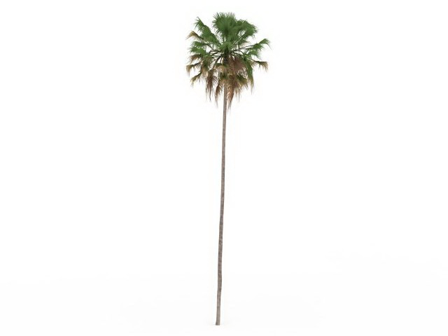 Tall and thin palm tree 3d rendering