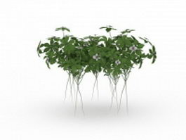 Organic herb plants 3d preview