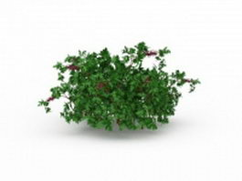 Flowering herbs for garden 3d preview