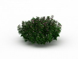Flowering herb plants 3d preview