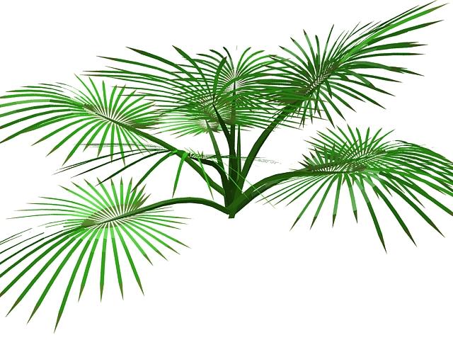 Palm plant 3d rendering