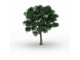 Sycamores Platanus tree 3d model preview