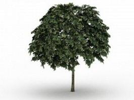 Common whitebeam tree 3d model preview