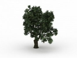 Brittle willow tree 3d model preview