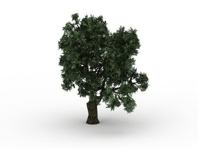 Brittle willow tree 3d rendering