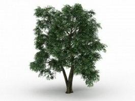 Field Elm tree 3d model preview