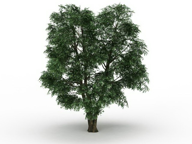 Field Elm tree 3d rendering