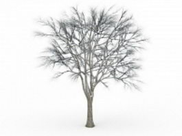 Snow ginkgo tree 3d model preview