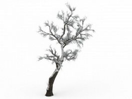 Snow covered hawthorn tree 3d model preview