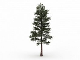Loblolly pine tree 3d model preview