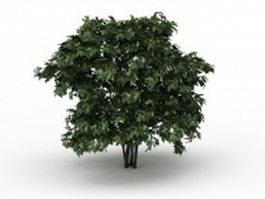 Deciduous shrub 3d model preview