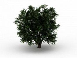 Ulmus campestris tree 3d model preview