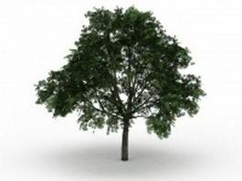 American buckeye tree 3d preview