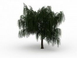Salix willow tree 3d preview