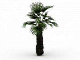 Japanese fan palm tree 3d model preview
