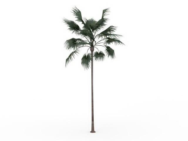 Australian fan palm 3d rendering