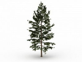 Eastern white pine tree 3d model preview