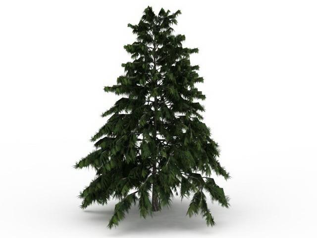 Deodar cedar tree 3d rendering