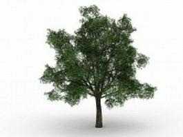 Pedunculate oak tree 3d model preview