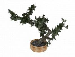 Bonsai tree 3d preview
