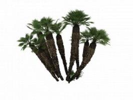Mediterranean dwarf palm 3d model preview