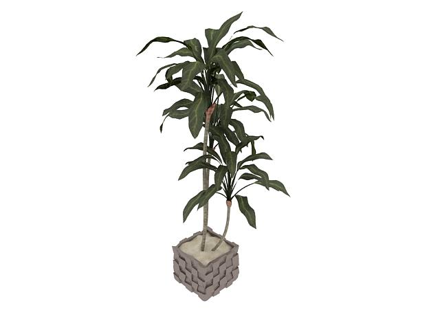 Potted indoor trees 3d rendering