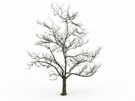 Old tree in winter 3d model preview