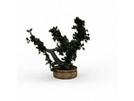 Bonsai tree 3d preview