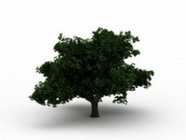 Summer tree 3d model preview